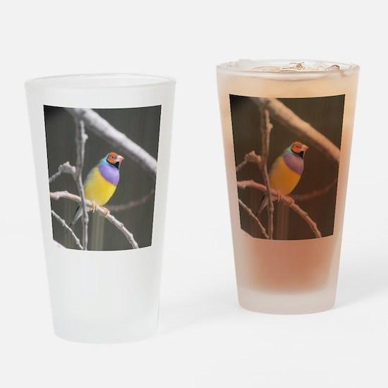 Gouldian finch Drinking Glass