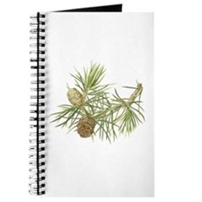 Japanese Umbrella Pine Journal