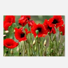Poppy-Red Poppies Postcards (Package of 8)