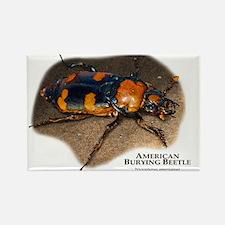 American Burying Beetle Rectangle Magnet