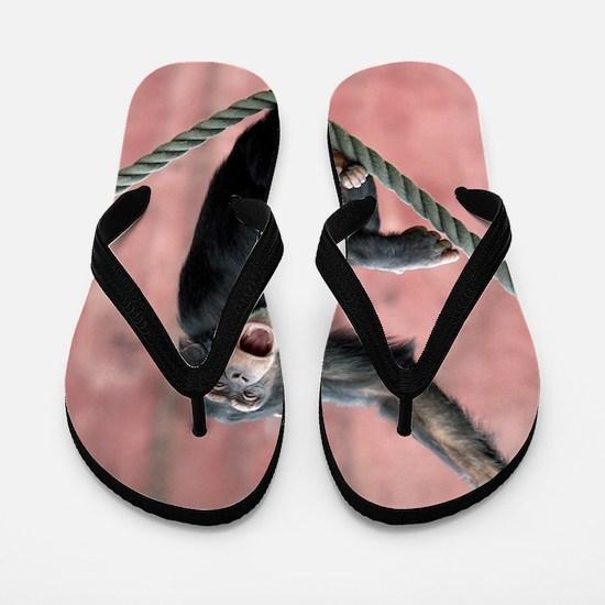 Chimpanzee001 Flip Flops