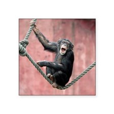 "Chimpanzee001 Square Sticker 3"" x 3"""