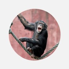 """Chimpanzee001 3.5"""" Button"""