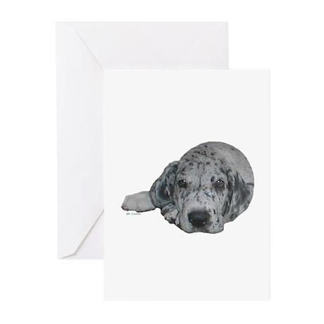 N Merle Pup c Greeting Cards (Pk of 10)