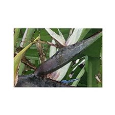 White Birds of Paradise Rectangle Magnet (10 pack)