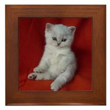 British Shorthair kitten Framed Tile