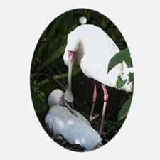 Spoonbill Oval Ornament