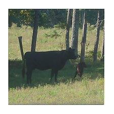 angus cow & calf Tile Coaster