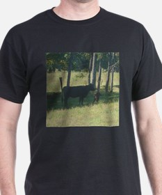 angus cow & calf T-Shirt