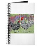 Marans Chickens Journal