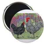 Marans Chickens Magnet