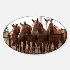 Cute Herd mare Decal
