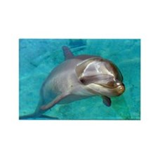 Dolphin Dip Rectangle Magnet