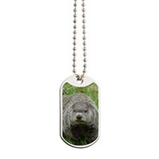 Groundhog Eating Dog Tags
