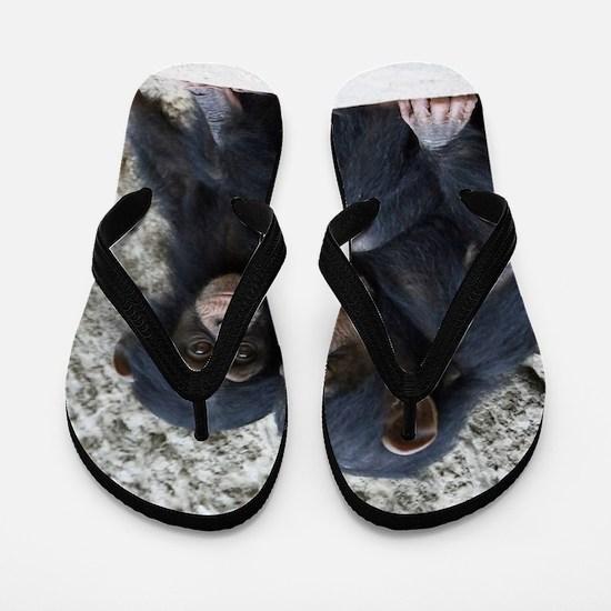 Chimpanzee002 Flip Flops
