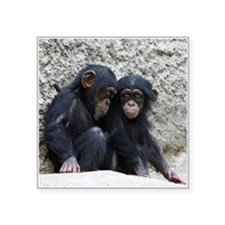 "Chimpanzee002 Square Sticker 3"" x 3"""