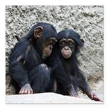 "Chimpanzee002 Square Car Magnet 3"" x 3"""
