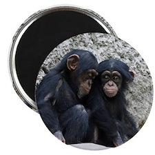 Chimpanzee002 Magnet