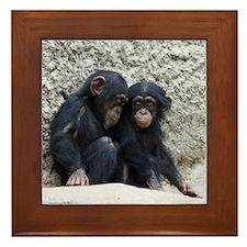 Chimpanzee002 Framed Tile