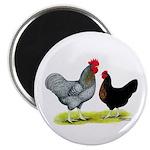 Black Sex-link Chickens Magnet