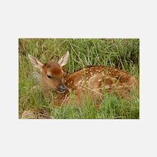 New Arrival Elk Rectangle Magnet (10 pack)