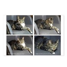CATOGRAPHY - white border Postcards (Package of 8)