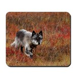 Alpha Male Wolf Mousepad