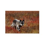 Alpha Male Wolf Rectangle Magnet (10 pack)