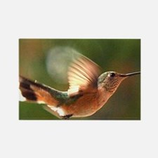 Humming Bird III Rectangle Magnet