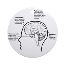 Brain Functions Round Ornament