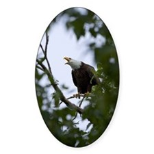Bald Eagle Oval Decal