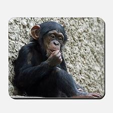 Chimpanzee003 Mousepad