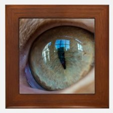 Cat's Eye Framed Tile