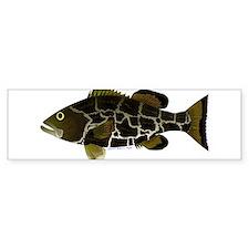 Black Grouper Bumper Bumper Sticker