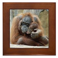 OrangUtan001 Framed Tile