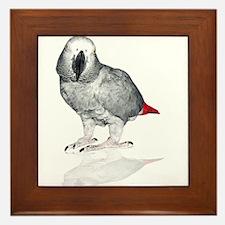 African Grey Parrot Framed Tile
