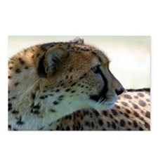 Cheeta Postcards (Package of 8)
