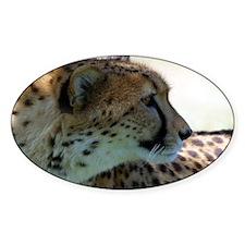 Cheeta Oval Decal
