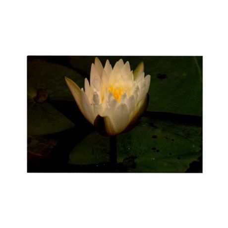 Waterlily Rectangle Magnet