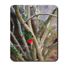 Bottlebrush Mousepad