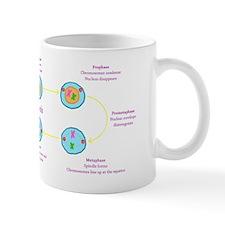 Mitosis Mug