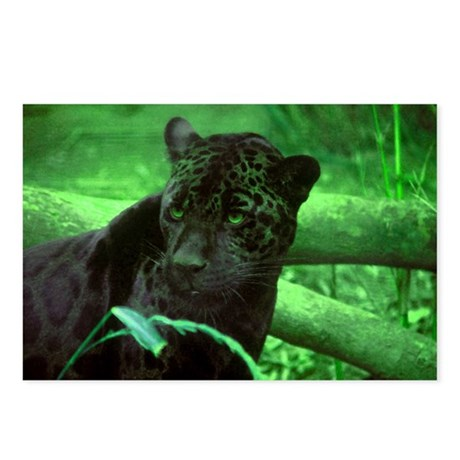 Black Jaguar Postcards (Package of 8)
