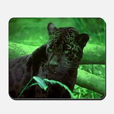 Black Jaguar Mousepad