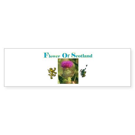 Flower Of Scotland(1) Bumper Sticker