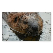 Beaver  swimming  Decal