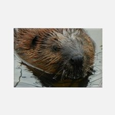 Beaver  swimming  Rectangle Magnet