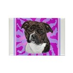 American Staffordshire Rectangle Magnet (10 pack)