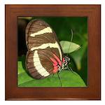 Butterfly pic Framed Tile