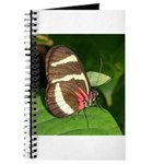 Butterfly pic Journal