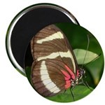 Butterfly pic Magnet